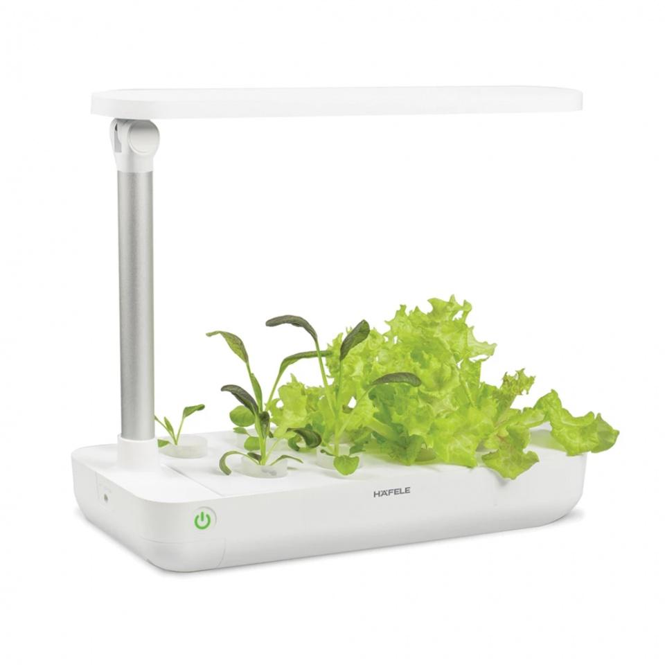 Hộp trồng cây TABLE BOX (T-BOX)