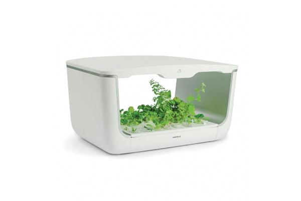 Hộp trồng cây HOME BOX (H-BOX)